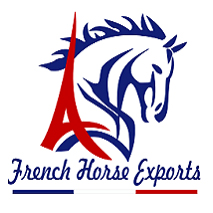French Horse Exports