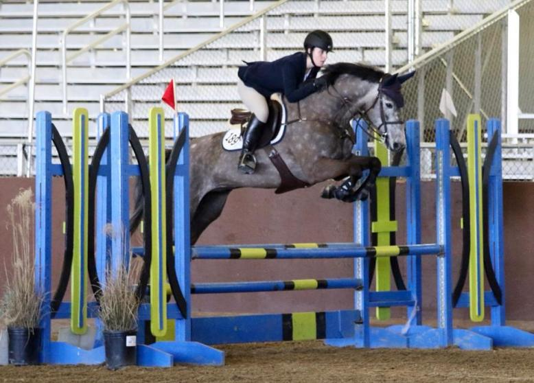 horses priced over 50k arenzo du rouet hongre selle fran ais de 9 ans par corofino et narcos ii. Black Bedroom Furniture Sets. Home Design Ideas