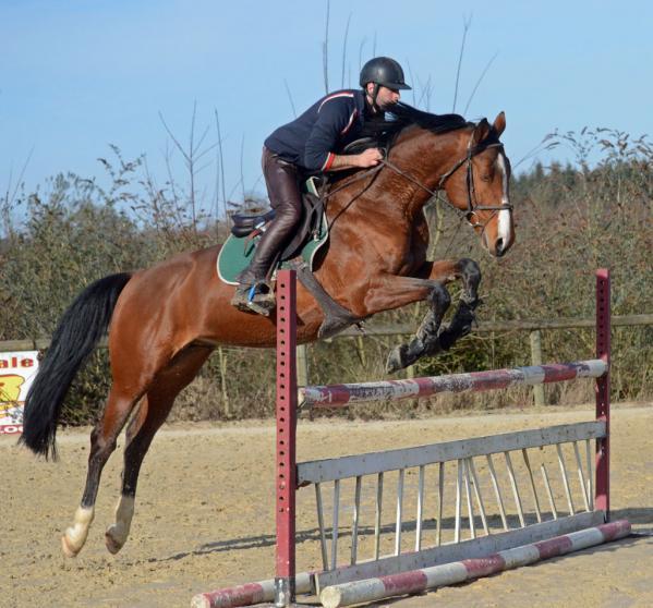 horses for sale utrillo hongre selle fran ais de 10 ans par lando et le condeen. Black Bedroom Furniture Sets. Home Design Ideas